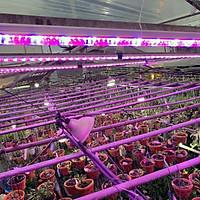 Đèn Trồng Cây Hoa Lan trong nhà LED Smart Light giúp bổ sung ánh sáng để cây hoa lan phát triển tốt và ra chồi nhanh (Dài 1.2m/Bộ)
