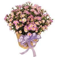 Giỏ hoa tươi - Sự Ái Mộ 3991