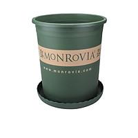 5GL KÈM DĨA LÓT - Chậu Nhựa Trồng Cây Monrovia