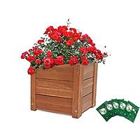 Chậu gỗ trồng cây Vuông Greenhome-Gỗ tràm bông vàng-D30xR30xC30cm - TẶNG KÈM 5 GÓI DƯỠNG HOA TƯƠI LÂU