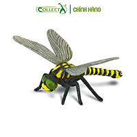 Mô hình thu nhỏ: Chuồn Chuồn Ngô - Golden-Ringed Dragonfly , hiệu: CollectA, mã HS 9653060[88350] -  Chất liệu an toàn cho trẻ - Hàng chính hãng