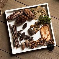 Set đồ khô decor 9 món phụ kiện trang trí chụp ảnh sản phẩm thiên nhiên vintage, set quả khô