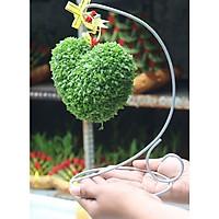Chậu treo cây may mắn hình trái tim