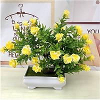 Chậu Bonsai Bông Hồng nhiều nhánh hoa màu vàng
