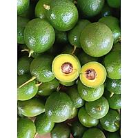 [Chỉ Giao HCM] Combo 10KG Trái Cây Sầu Riêng + Bơ + Hồng Giòn Lâm Đồng Giá Tận Vườn