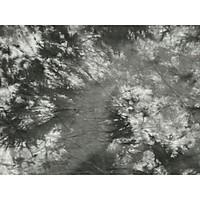 Phông loang chụp ảnh chuyên dụng MM-04 2.9X5M