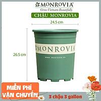 3 Chậu nhựa trồng cây MONROVIA 3 Gl, chậu trồng cây, chậu cây cảnh mini, để bàn, treo ban công, treo tường, cao cấp, chính hãng thương hiệu MONROVIA