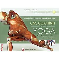 Các Cơ chính trong Yoga - Hướng dẫn về Giải phẫu Chức năng trong Yoga