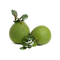 [FARMVILL] [Chỉ Giao HCM] Combo 2 Trái Bưởi Da Xanh ( Từ 1.5kg - 2kg/Trái)