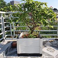 CHẬU GHÉP THÔNG MINH (50x50x39)Cm: Bền từ 8-10 năm, phù hợp mọi cây trồng và không gian, Module tùy biến kích thước, an toàn, trọng lượng nhẹ, kết cấu chắc chắn, có khay trữ và thoát nước.