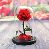 Beauty and The Beast Rose ,Rose Kit, Red Silk Rose with 10 LED Lights in Glass Dome on Wooden Base for Lover, Weddings,