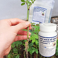 Bột kích rễ Israel cây hoa hồng và cây thân gỗ khác. Hủ 100gr Hormoril 6 giúp kích thích cây ra rễ nhanh, khỏe và sát khuẩn vết cắt để đạt tỷ lệ thành công cao trên cây con và cây giâm chiết cành