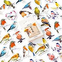 Hộp 45 Miếng Dán Sticker Trang Trí Thế Giới Loài Chim