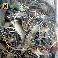 Tôm Càng xanh OXY NIDTICO-Đông IQF (15-20con/kg)