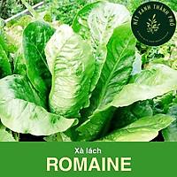 Hạt giống Xà Lách Romaine 2gr
