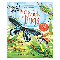 Usborne Big Book of Bugs