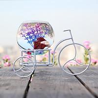 Bể cá mini Xe Đạp Xì Teen Màu Trắng 29