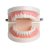 Mô Hình Răng Giả Hỗ Trợ Giảng Dạy