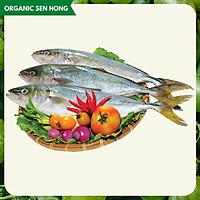 Cá Cam Nhật 1kg