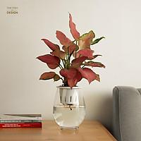 Bình cây vạn lộc hồng thủy sinh | THE FISH SIZE L (trang trí trong nhà, để bàn làm việc,...)