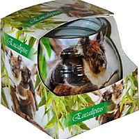 Ly nến thơm Admit ADM7226 Eucaliptus 80g (Hương bạch đàn)