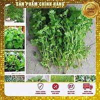 COMBO 12 loại hạt giống rau gia vị ngắn ngày cho vụ đông