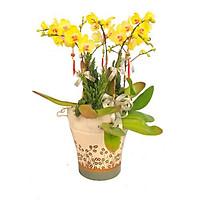 Chậu hoa tươi - Tết Tài Lộc 4327