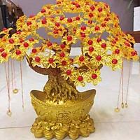 CÂY KIM TIỀN TÀI LỘC CHO XUÂN VỀ MAY MẮN