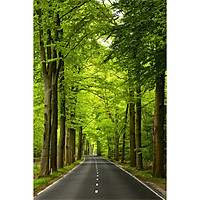 Tranh dán tường con đường cây xanh SN48(80x180cm)
