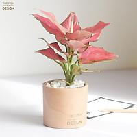Chậu cây vạn lộc hồng | THE FISH SIZE S (trang trí trong nhà, để bàn làm việc,...)