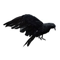 Halloween Simulation Black Crow Artificial Bird Prop Art And Crafts For Halloween Party Decoration