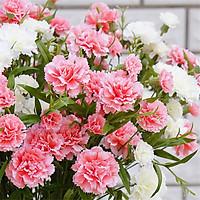 Bộ 3 gói Hạt giống hoa cẩm chướng kép