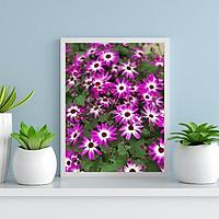 Tranh in màu decor trang trí Hoa Cúc25 _ African Daisy