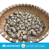 [Chỉ Giao HCM] - ỐC Hương Sống ( Kg ) Size 100 - 110con/kg