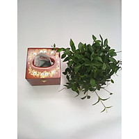 Hộp đựng giấy ăn chạm khảm hoa văn bằng gỗ hương đỏ loại 1.