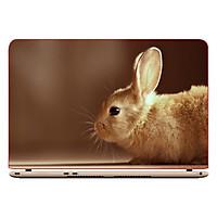 Miếng Dán Trang Trí Decal Laptop Trang Trí Animal Cartoon DCLTDV 206