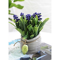 Chậu hoa lavender tím