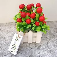 Chậu Cây Cherry Giả Đỏ Mọng