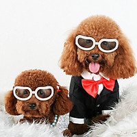 New Pet Goggles Small Dog Sunglasses Anti-Fog Anti-wind Glasses Eye Protector Waterproof Skiing Sun UV Protection Safety