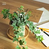 Chậu cây thường xuân | THE FISH SIZE M (trang trí trong nhà, để bàn làm việc,...)