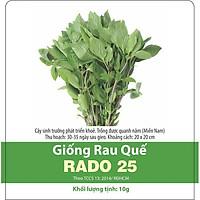 Hạt Giống Rau Húng Quế Rado 25 gói 10gr - Rạng Đông Thân màu tím, lá màu xanh mướt, có mùi thơm dễ chịu. Trồng quanh năm