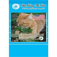 50h Hạt Giống Catnip / Cỏ Mèo (Nepeta cataria)
