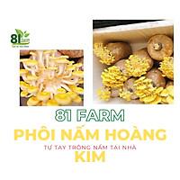 com bo 5 Phôi Nấm Hoàng Kim - Sò Vàng