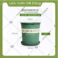 5 Chậu nhựa trồng cây MONROVIA 1 Gl, chậu trồng cây, chậu cây cảnh mini, để bàn, treo ban công, treo tường, cao cấp, chính hãng thương hiệu MONROVIA
