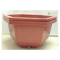 3 Chậu Nhựa Lục Giác Trồng Hoa, Cây Cảnh Bình Thuận Bonsai 350x210