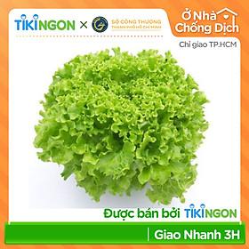 [Chỉ giao HCM] - Xà lách thủy tinh thủy canh VIETGAP - được bán bởi TikiNGON - Giao nhanh 3H