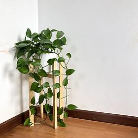 Kệ gỗ để chậu cây - Cho chậu đường kính 22 - 24 cm