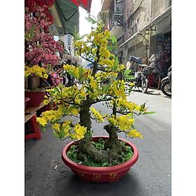 Cây Hoa Mai Bonsai Nhựa Cao 92 cm Hoa Mai Trang Trí Tết