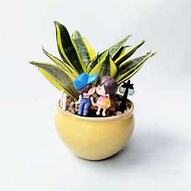 Cây lưỡi hổ thái trồng chậu trang trí phụ kiện tiểu cảnh đẹp y hình, cây để bàn văn phòng, tạo không gian xanh