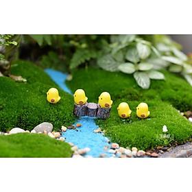 Gà Con Mini Trang Trí Chậu cây, Terrarium, Sen Đá, Xương Rồng